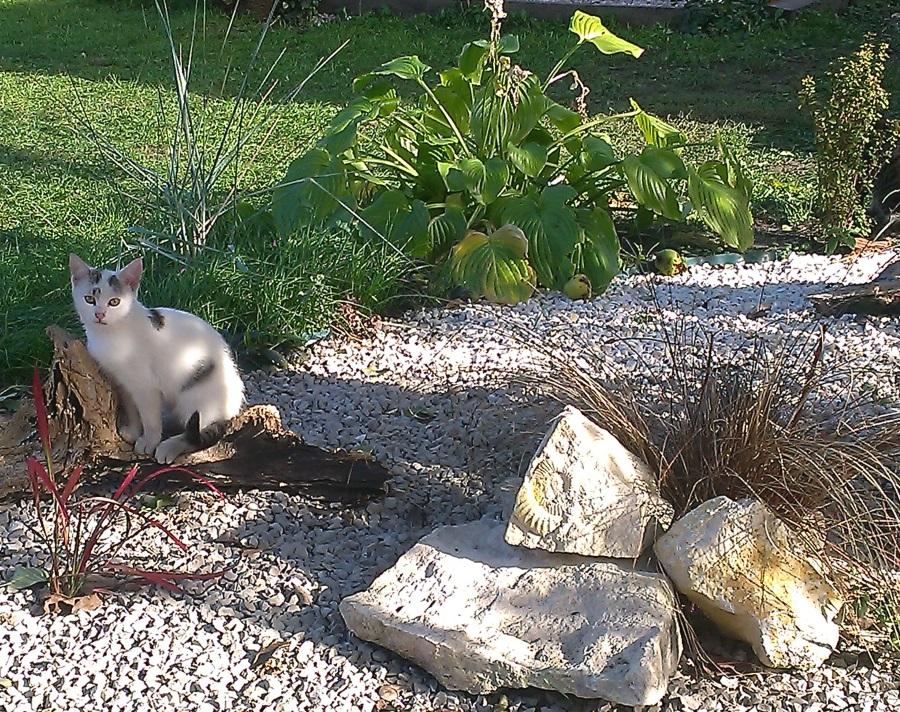 koty w etnoJurze